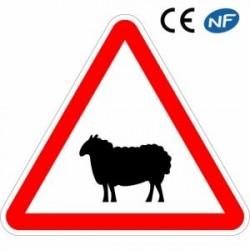 Panneau routier annonçant une traversée d'ovins probable